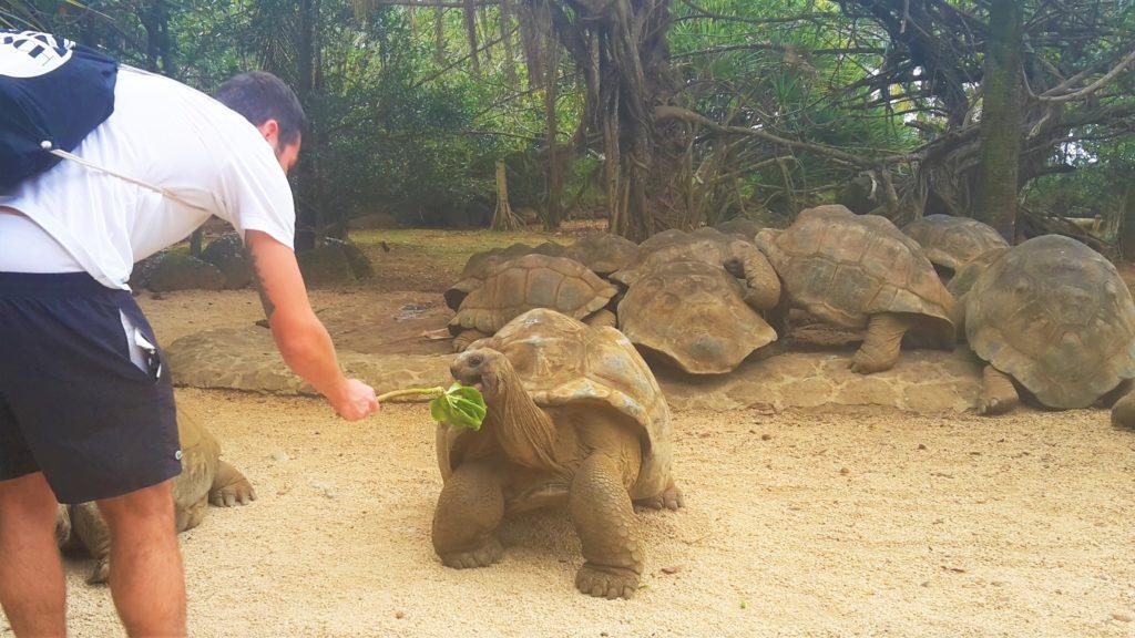 Schildkröten füttern