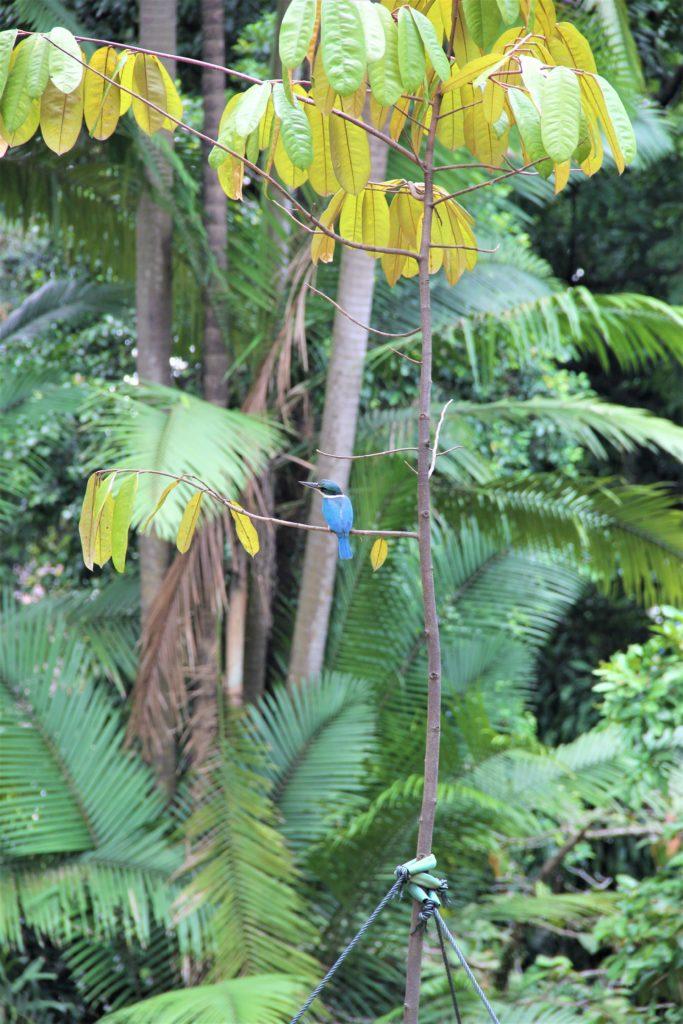 Botanical Garden Singapur