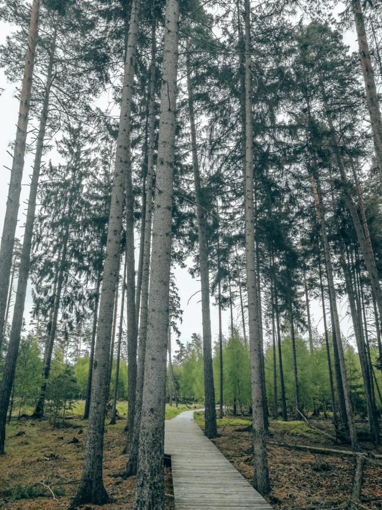 Pöllwitzer Wald