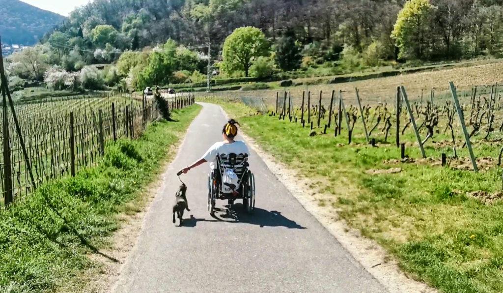 Spazierweg Pfalz