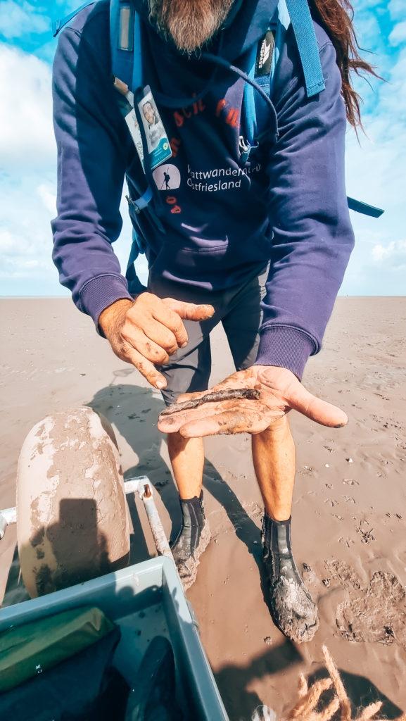 Wattwurm Nordsee